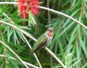 Anna\'s Hummingbird - Jackie Allison