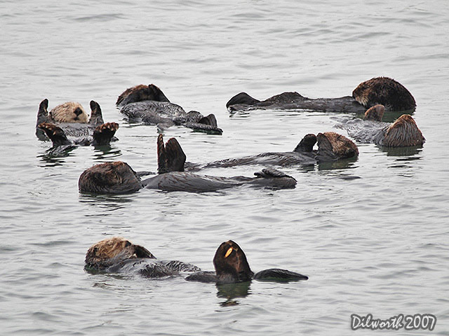 391 California Sea Otters
